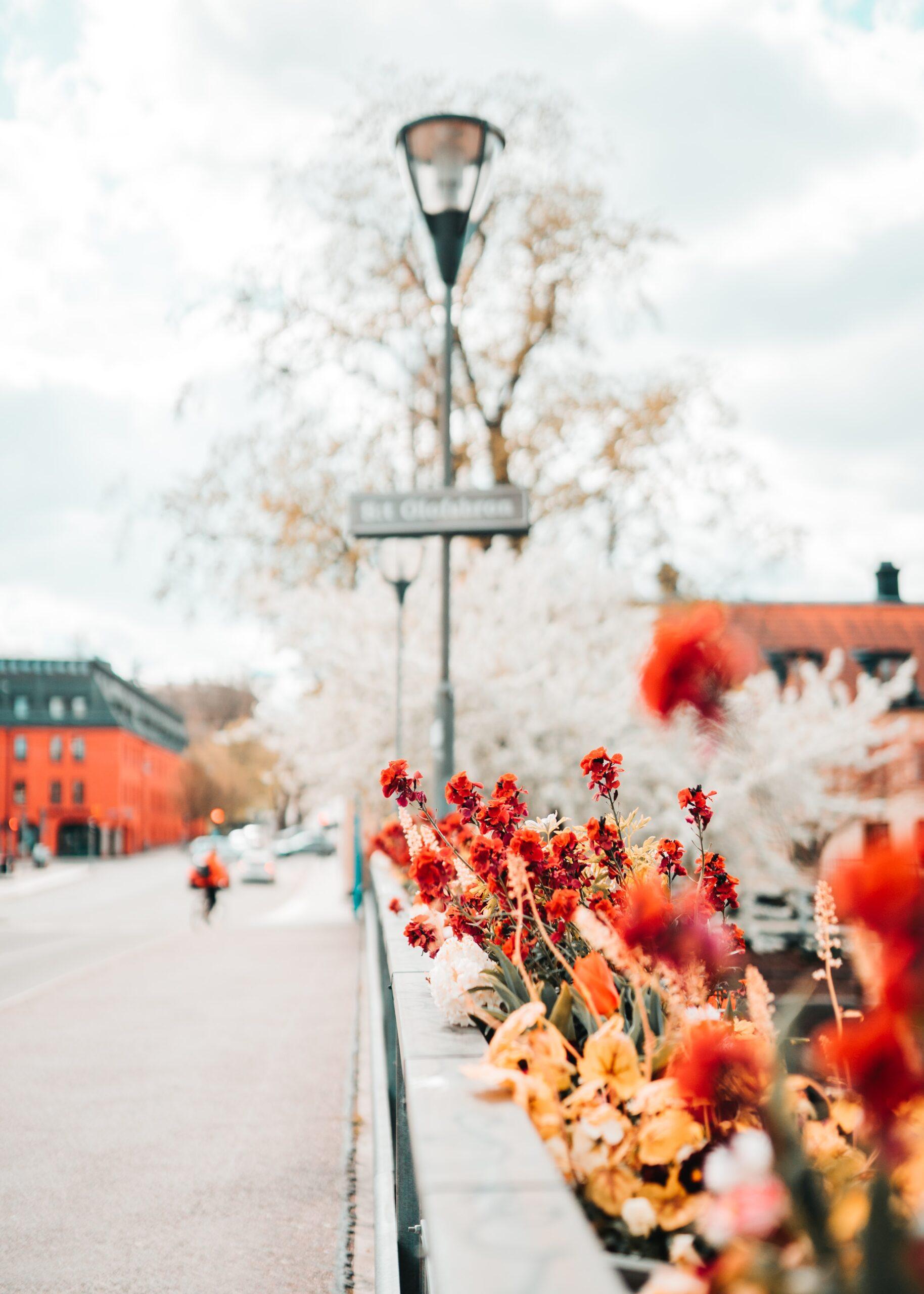 Photo Emil Widlund
